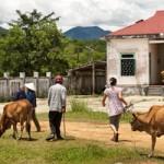 Vietnam Village Life